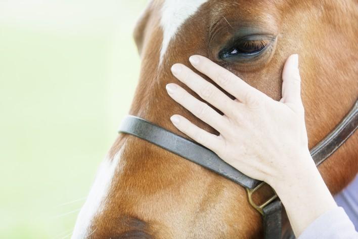 Female-veterinarian-performing-chiropractics-000040601482_Double
